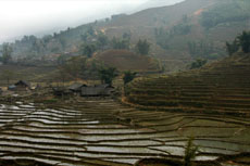 Terraces of Sapa