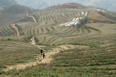 Men at Work In the Terraced Ricefields - Sapa