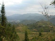 ban pho village picture