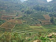 field in ban pho bac ha