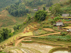 rice terrace in cat cat sapa