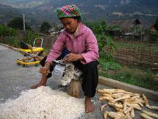 ta van hmong