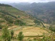 terrace in ban pho village