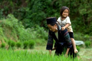 rice-transplanting in sapa