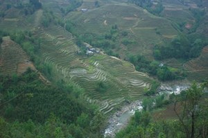 terraced field sapa