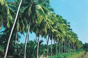 Things to know about Ben Tre
