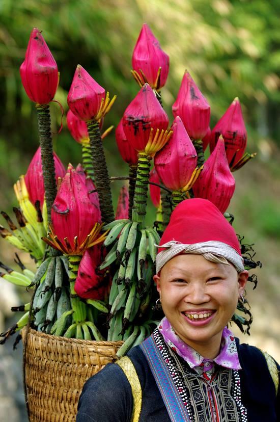 banana flowers in sapa