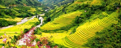 Trekking to Muong Hoa Valley