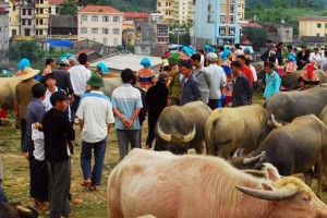 sapa cancau market by sapa travel guide