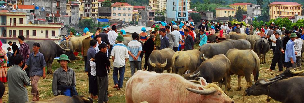 sapa cancau market by sapa travel guide