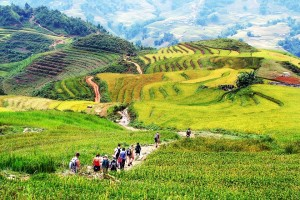 sapa trekking and field