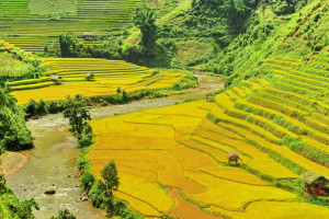 terrace sapa for trekking