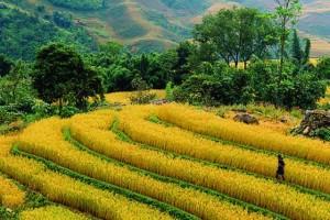 sapa field