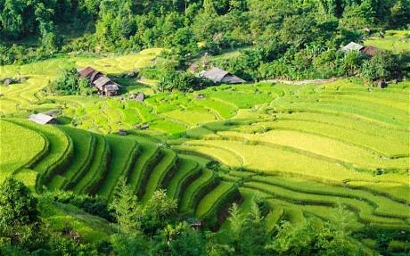 vietnam-paddies
