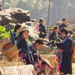 Bac Ha market by bus 3 days